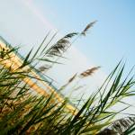 """Beach Grass"" by wendyaperry"