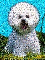 West Highland Terrier...Amazing Montage Mosaic ill