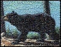 West Virginia Black Bear...Amazing Montage Mosaic