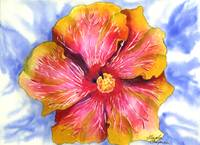 Pink and Yellow Groovy Hibiscus