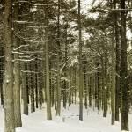 """""""Trees"""" by Inyunyyn"""