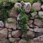 """Stone Wall and Vines"" by JessicaKrauseSmith"