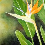 """Bird of Paradise 1"" by landomac"