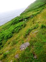 Green Coast of Dingle