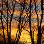 """Sunset & Trees"" by MichaelClydeEllis"