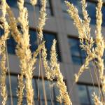 """Winter grasses"" by jeco"