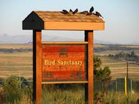 Bird Sanctuary