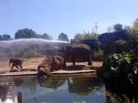 elephant shower