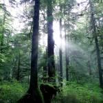 """Sun behind trees"" by jeffreysinnock"
