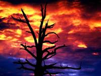 Silhouette of Dead Tree