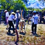"""Cowboys at Work on the Ranch"" by johncorney"
