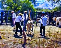 Cowboys at Work on the Ranch