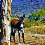 """Donkey Behind Barbed-Wire Fence #2"" by johncorney"