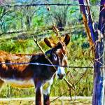 """Donkey Behind Barbed-Wire Fence"" by johncorney"
