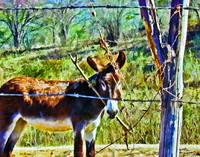 Donkey Behind Barbed-Wire Fence