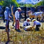 """Cowboys Branding a Calf"" by johncorney"