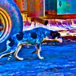 """Blue Dog"" by johncorney"