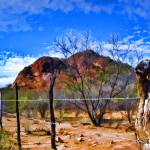 """Barbed Wire Fence Desert Landscape"" by johncorney"