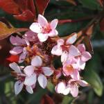"""Spring Blossoms"" by naliniprasanna"
