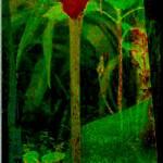 """Calla Enjoys Cool Green"" by JudyMarisa"