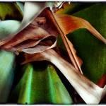"""""""Verde 8"""" by jruiz"""