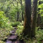 """Pipiwai Trail, Maui (H0081)"" by MarkDahmke"