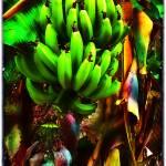 """""""Verde 10"""" by jruiz"""