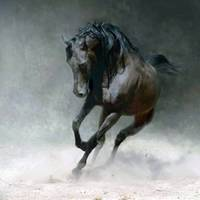 black and brown horse
