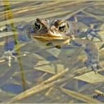 """""Ribbit..."""" by PattysPics"