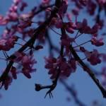 """""""""""Spring"""""""" by tstarnes"""