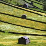"""swaledale"" by JohnRobertson"