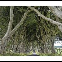 Dark Hedges HDR Art Prints & Posters by harkyinoz