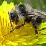 """Wet Bee"" by eob"