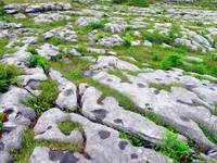 Bed of Limestone