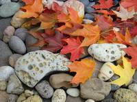 OFFICE ART Prints AUTUMN Leaves Rock Garden