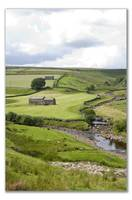 Swaledale in August