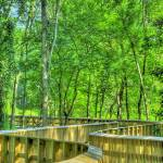 """""""The Winding Path"""" by robbdee40"""