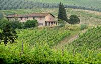 Italian Wine Country