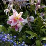 """""""floral palette"""" by MarkLaster"""