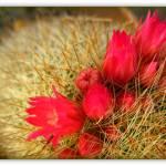 """""""Cactus Bokeh"""" by Caz"""
