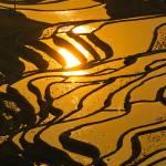 """""""rice terraces of yuanyang,  yunnan, china"""" by kalishko"""
