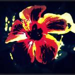 """""""Flowering time"""" by al3ifrit"""