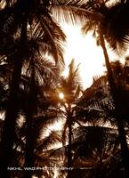 The Sun & The Coconut Trees