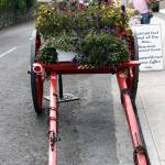 """Flower Cart, Knightstown"" by e_mulvey"