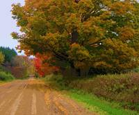 Autumn On A  Country Lane