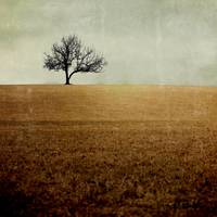 Lone Tree (Large Square)