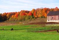 Michigan Fall on the Farm