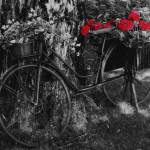 """black and white bike with flowers"" by mandlesgirl"