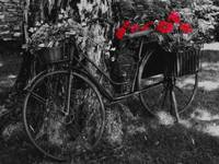 black and white bike with flowers