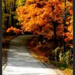 """Radiant Autumn"" by PhotographyofGrace"